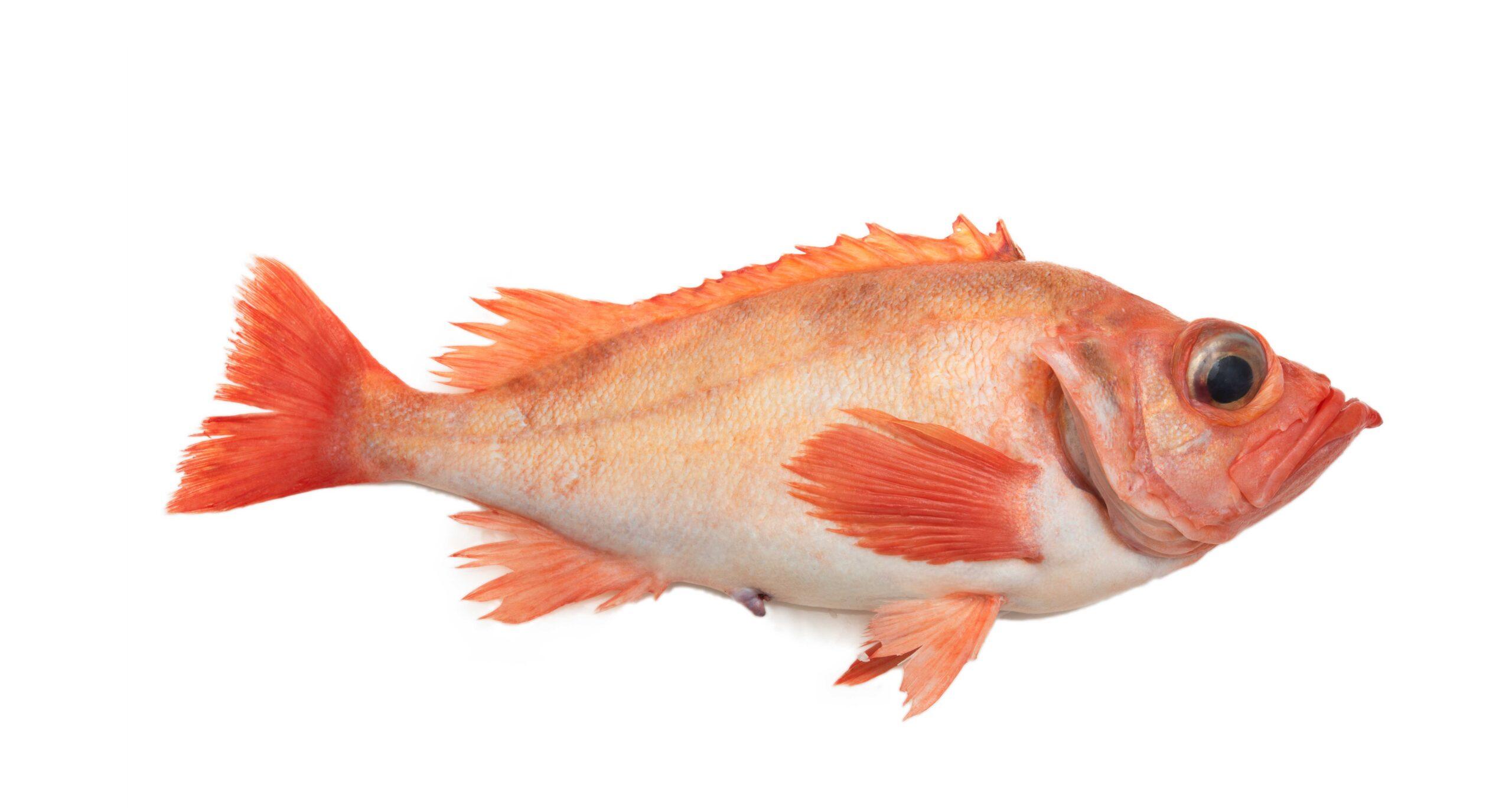 redfish-scaled-1-1-1-1-1-1-1.jpg